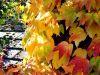 036.-Autumn-Tints-Barnsley