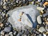 069-Rocky-Road-footprint-made-from-pebbles