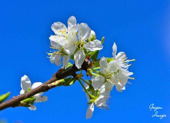 023-Plum-Blossom