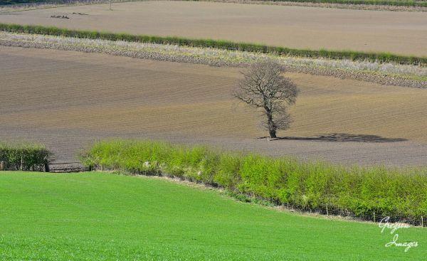 027-Spring-landscape