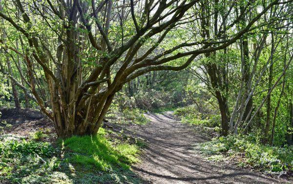 043-Woodland-Walk