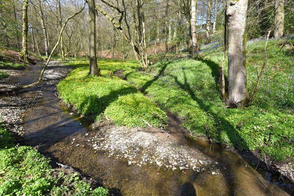 052-The-stream-at-Gunthwaite