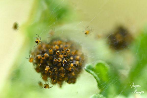 522-Spider-ball-in-the-garden