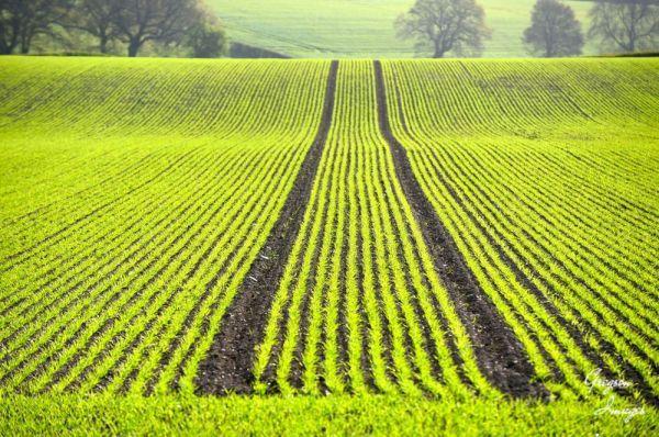 182-Spring-Fields
