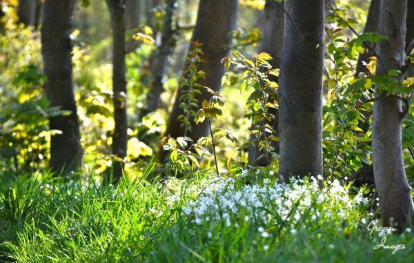 184-Scenes-of-Spring