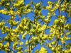 1_181-New-leaves-in-Spring