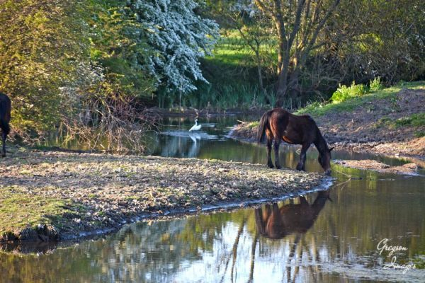 319-Lead-a-horse-to-water