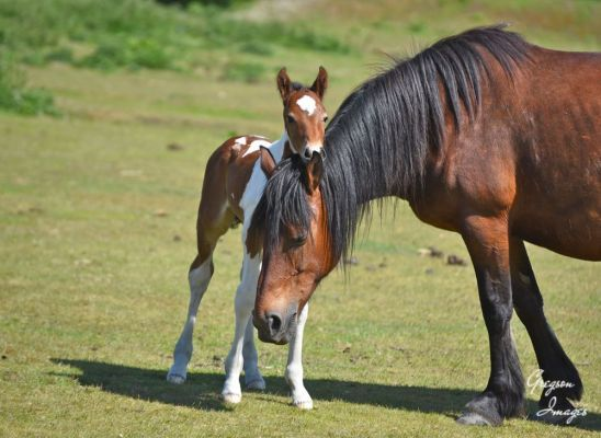 376-New-born-foal-next-to-its-mother