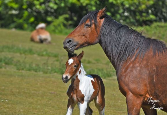 377-New-born-foal-next-to-its-mother