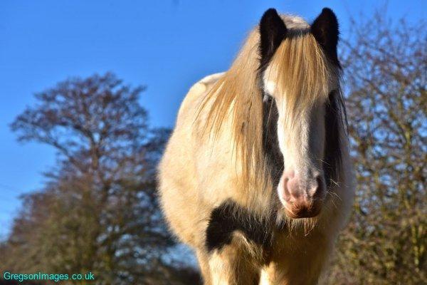 024-Curious-Horse