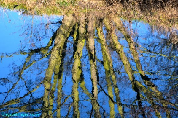 029-Reflections-on-a-winters-day