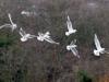 006-Birds-in-flight