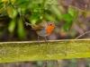 036-Robin-in-Winter